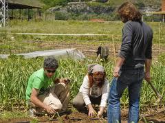 Jóvenes trabajando en un huerto en Rivas