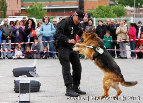 Un agente muestra el entrenamiento de un perro-policía durante el Día de la Policía Local de 2013 (Foto archivo Enruqe Ayala - Rivas Actual)