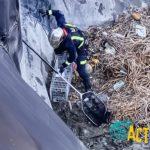 RescateGato24